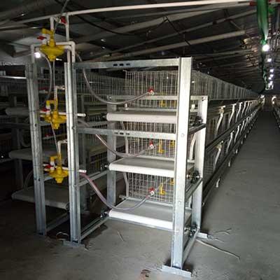 gaiola-de-galinhas1